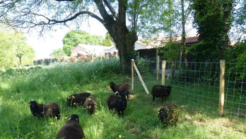 6e4a186372dee323a4b570a833dee1b0-la-montagne-des-moutons-au-parc-du-launay